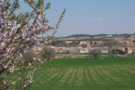 El Picazo en primavera